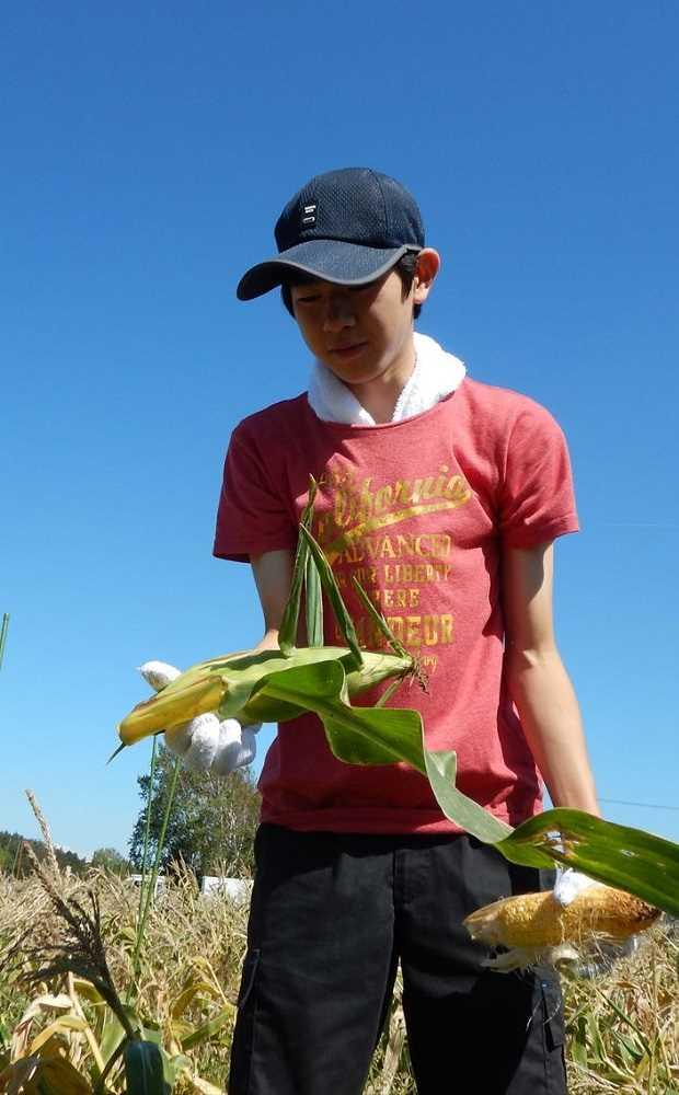 酪農学園大学附属とわの森三愛高等学校 とうもろこし収穫